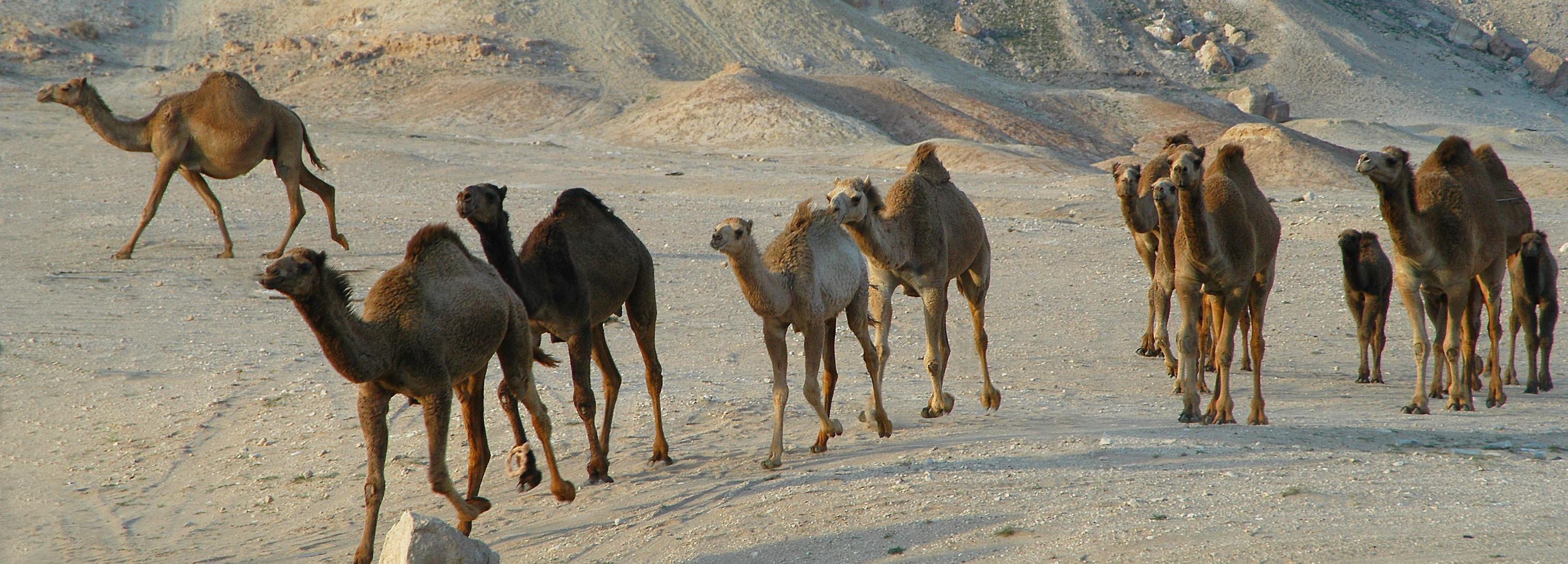 lo-stato-del-kuwait